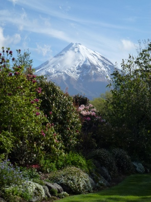 When planting rhododendrons it's always useful to have a snow-capped mountain in the distance...