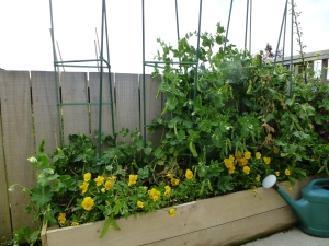 A narrow raised bed against the fence has room for plentiful peas plus a splash of colour.