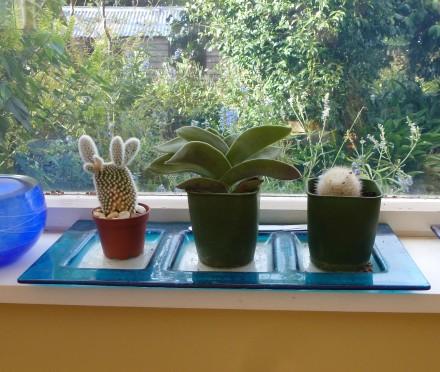 Cacti & Elephant's Ears