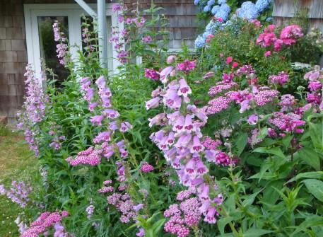 Perennials border