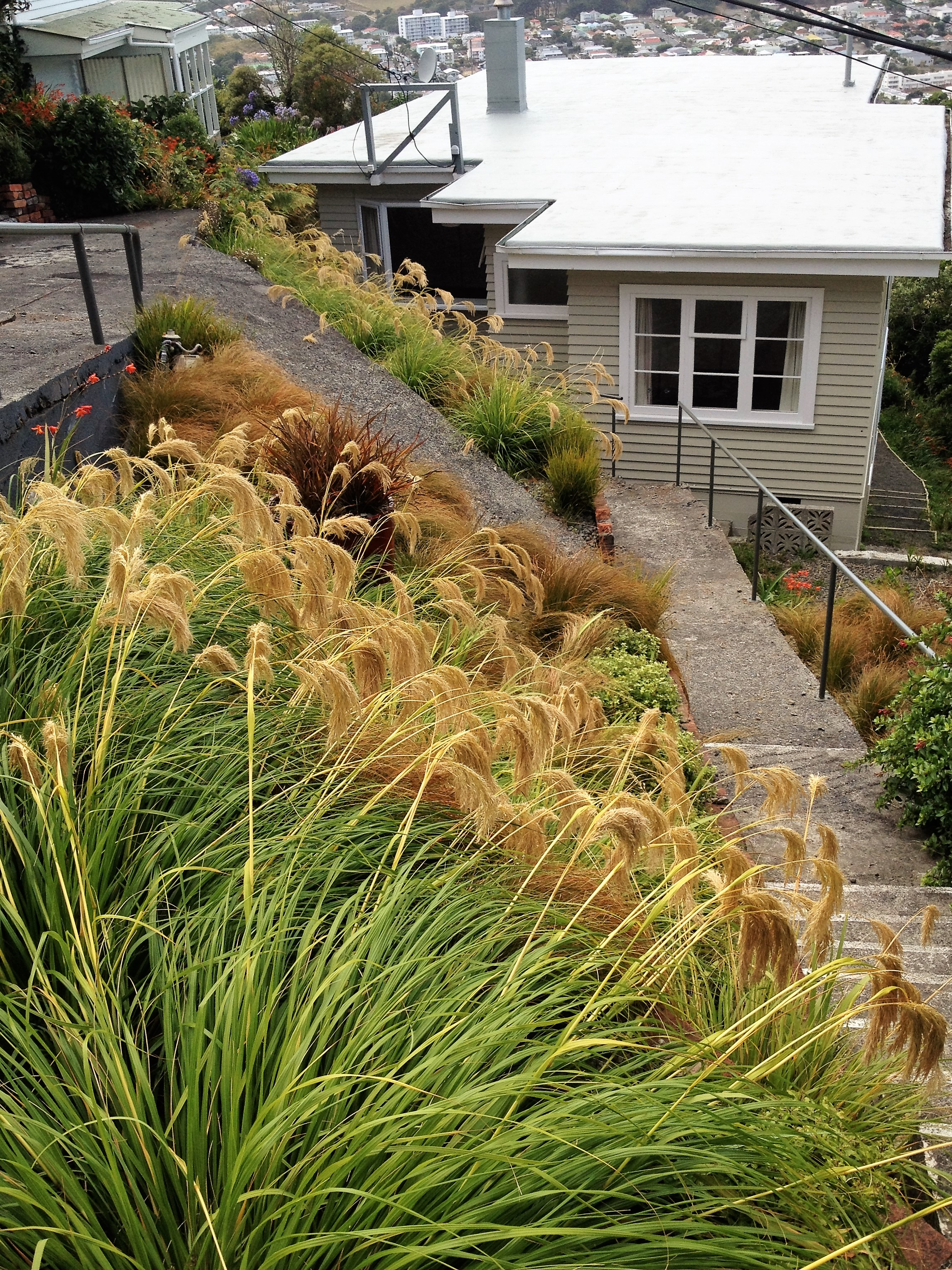 Recent projects sarah norling landscapes for Native garden designs nz