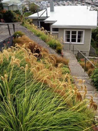 NZ native grasses in terraced garden